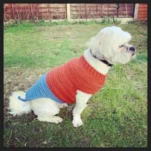 a small fluffy jumper wearing a crochet bespoke doggie jumper